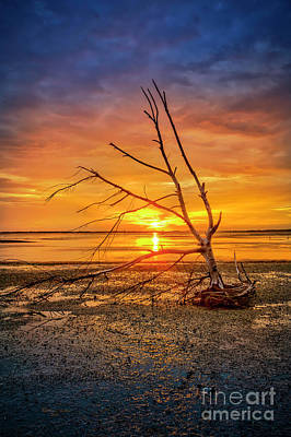 Driftwood Photograph - Leaning Into The Sunset by Marvin Spates