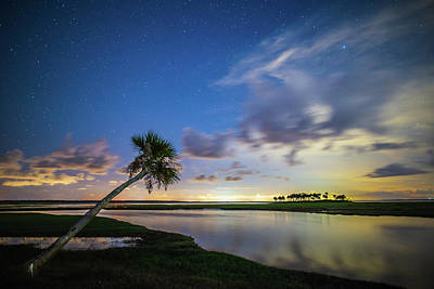 Photograph - Leaning Palm Tree At Night by Stefan Mazzola