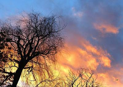 Photograph - Leaning Willow Sunset by Will Borden