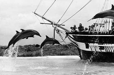 Recreational Boat Photograph - Leaping Dolphins by Leonard G Alsford