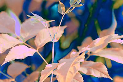 Digital Art - Leaves-1062 Pink by Ajp