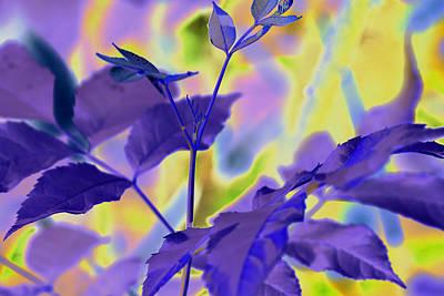Digital Art - Leaves-1062 Purple by Ajp