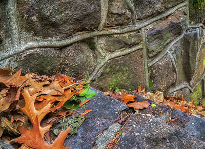 Photograph - Leaves Along The Stone Wall by Gary Slawsky