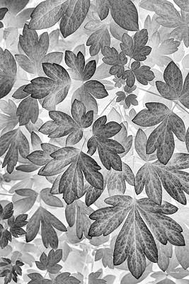 Photograph - Leaves Black And White Plant Pattern by Christina Rollo