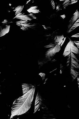 Photograph - Leaves Black And White by Sarah Morgan