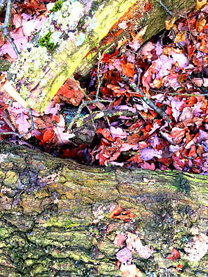 Photograph - Leaves by Artist Dot