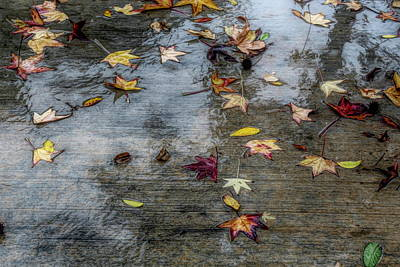 Photograph - Leaves In The Rain by Alison Frank