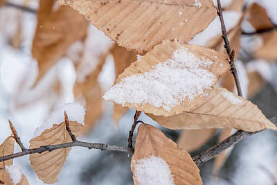 Photograph - Leaves In Winter  by John McGraw