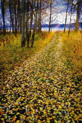 Photograph - Leaves On Trail by Tom Gresham