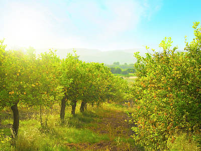 Branch Photograph - Lemon Orchard by Brzozowska