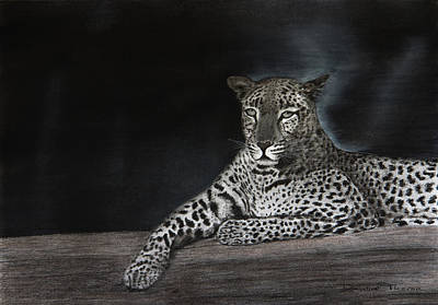 Drawing - Leopard by Dawid Theron