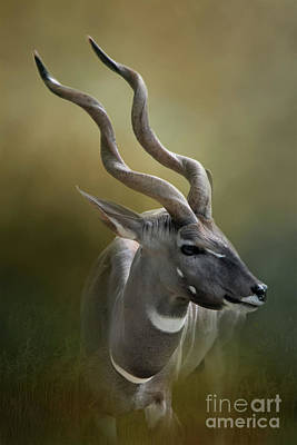 Photograph - Lesser Kudu by Ed Taylor