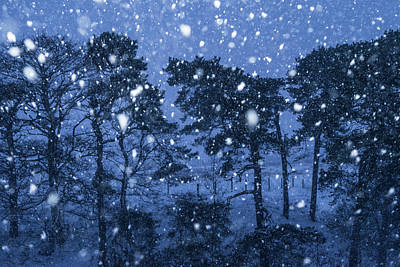 Photograph - Let It Snow by David Taylor