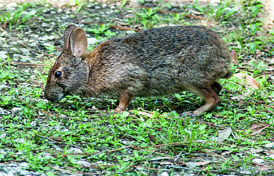 Food And Flowers Still Life - Lettuce Lake Rabbit by Norman Johnson