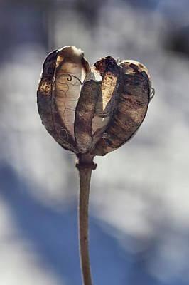 Travel - Lice line. Seedcase of the Martagon lily by Jouko Lehto