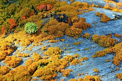 Photograph - Lichen Kaledioscope by Bruce Gourley
