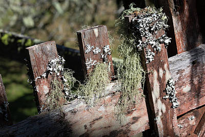 Photograph - Lichen On An Old Red Fence  by Kathleen Bishop