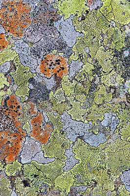 Photograph - Lichen On Stone by Tim Gainey