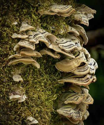 Photograph - Lichen Ruffle by Jean Noren