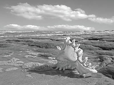 Photograph - Life's A Beach - Murex Ramosus Black And White by Gill Billington