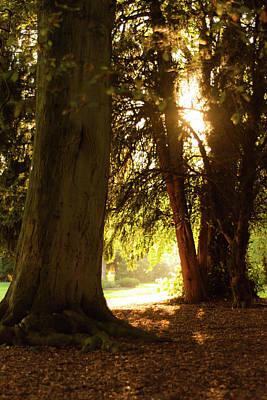 Photograph - Light Between Trees by Scott Lyons