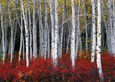 Aspen Wall Art - Photograph - Light In Forest by Leland D Howard