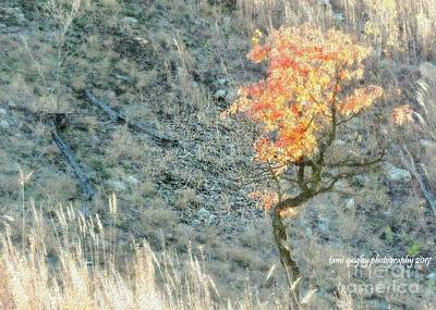 Photograph - Light In October  by Tami Quigley