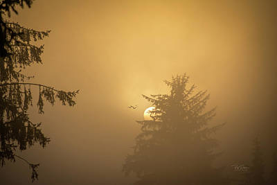 Photograph - Light Morning Fog by Bill Posner