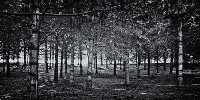 Photograph - Light Through The Trees by David Patterson