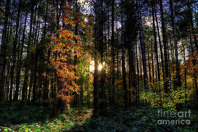 Digital Art - Light Through The Trees by Nigel Bangert