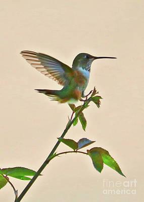 Photograph - Light Touch Hummingbird by Carol Groenen