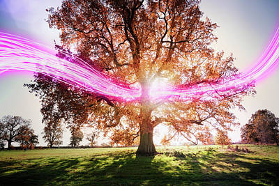 Scenic Photograph - Light Trails Passing Around Tree by Robert Decelis Ltd