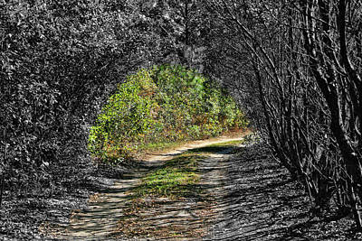Photograph - Light Unto My Path by Cathy Harper