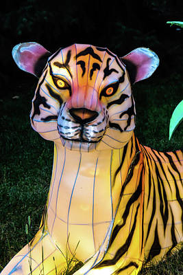 Photograph - Lighted Tiger by Ron Roberts
