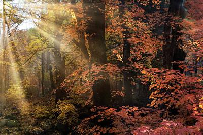 Photograph - Like A Fall Fairytale  by Saija Lehtonen