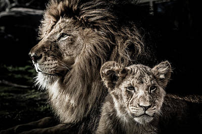 Photograph - Like Father, Like Son by Ron Pate