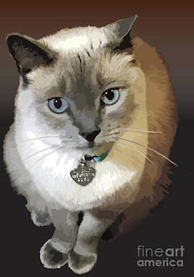 Clouds Rights Managed Images - Lilac Point Cat Royalty-Free Image by Kathryn Yoder