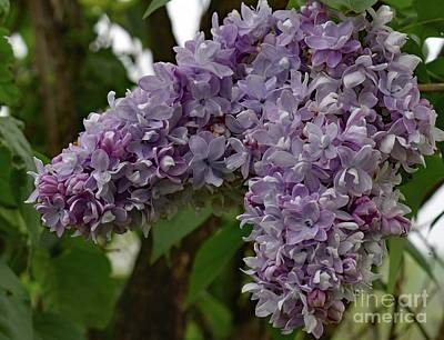 The Beatles - Lilacs Bring The Scent Of Spring by Cindy Treger