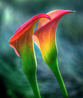 Photograph - Lilies by John Rodrigues