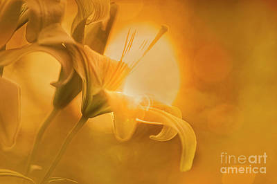 Photograph - Lily And Sun by Scott Kemper