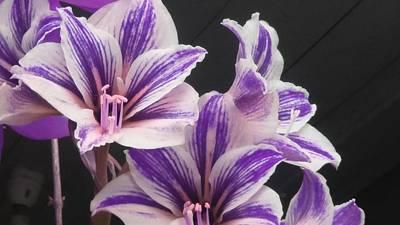 Blue Hues - Lily in purple by Nilu Mishra
