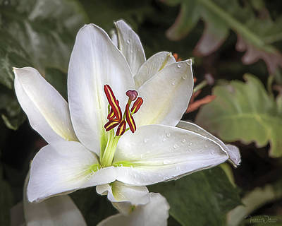 Photograph - Lily In The Rain By Tl Wilson Photography by Teresa Wilson