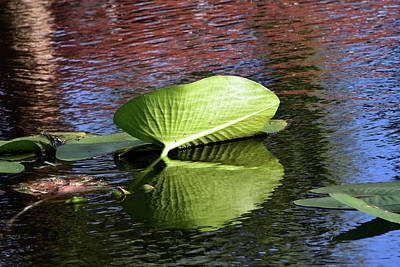 Photograph - Lily Pad In The Wind by William Tasker
