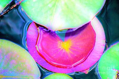 Photograph - Lily Pad by Merle Grenz