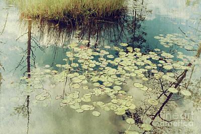 Photograph - Lily Pads by Debra Fedchin