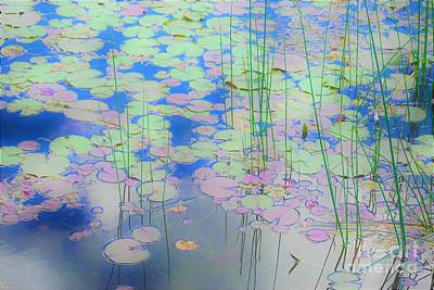 Photograph - Lily Pads1 by Merle Grenz