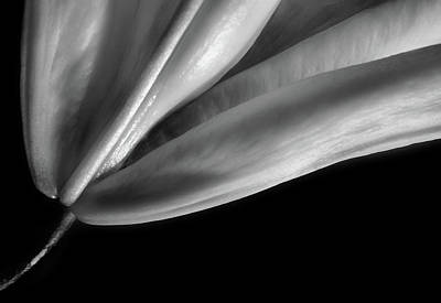 Photograph - Lily by Perry Correll