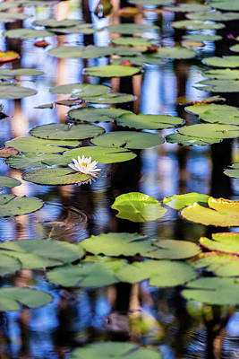 Photograph - Lilypad Cypress Pond by Kurt Lischka