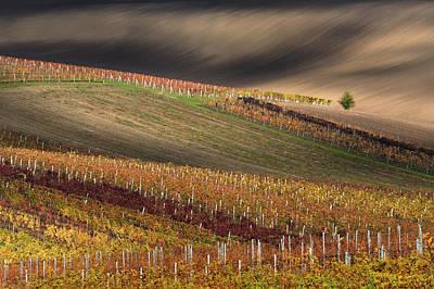 Photograph - Line And Wine 1 by Vlad Sokolovsky