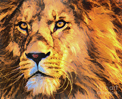 Photograph - Lion 22918 by Ray Shrewsberry